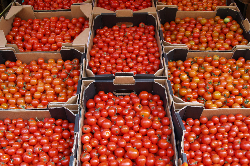 ... Grower Or Consumer Of Fruits And Vegetables, At Some Point You Will  Probably Be Concerned About The Optimal Temperature At Which To Store Your  Produce.